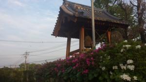 観音寺の花と緑